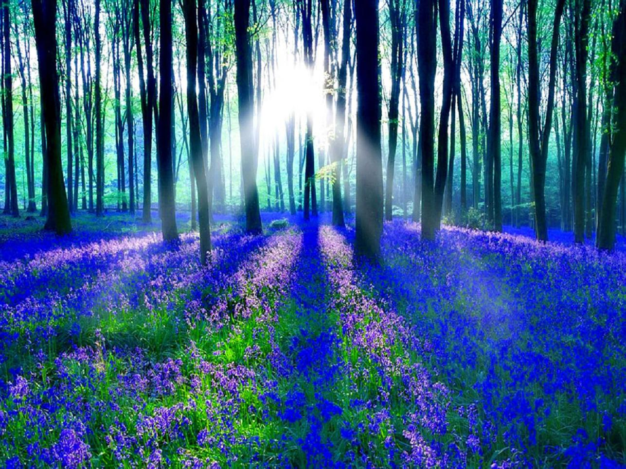 Bluebells in wooded area. Becomes a unicorn running in a field of goldenrod when the word Unicorn is clicked